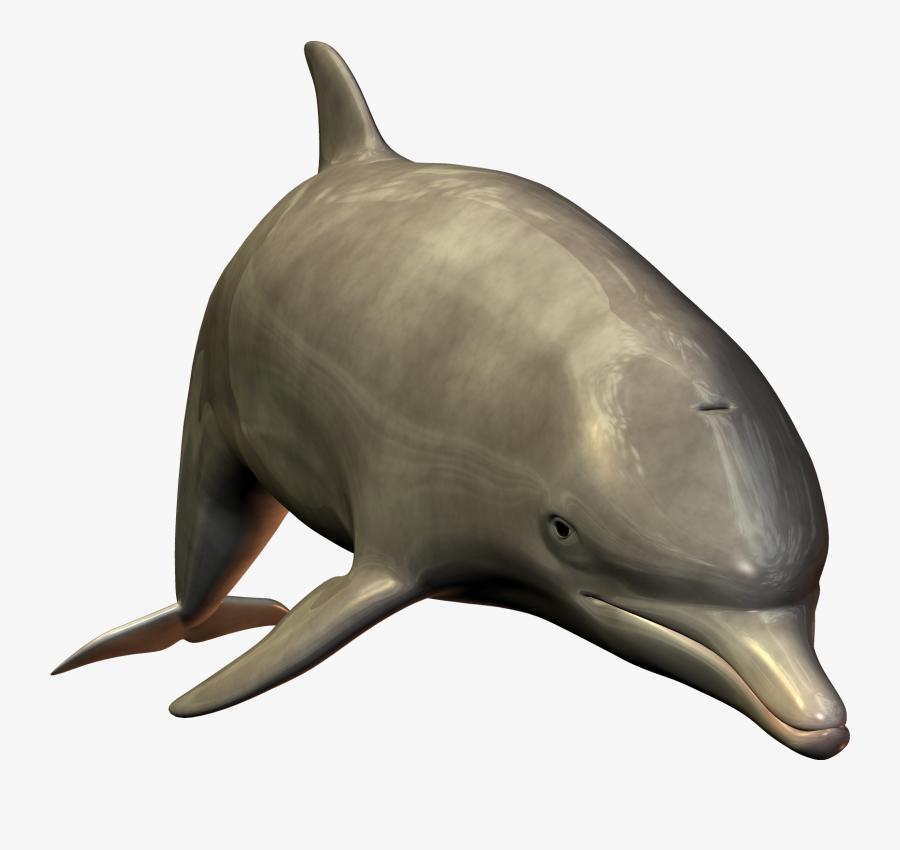 Dolphin Clipart Winter.
