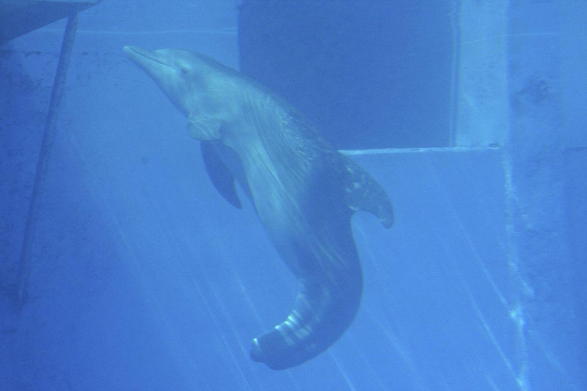 Winter (dolphin).