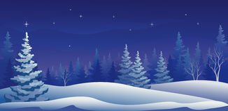 Evergreen Winter Night Stock Photo.