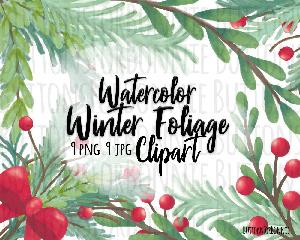Watercolor, winter foliage, leaves, evergreen, clipart.