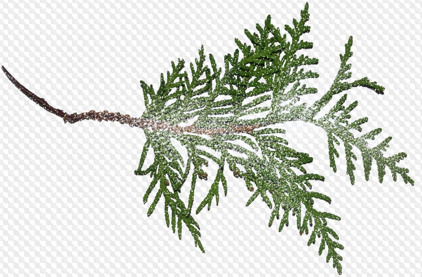 Snow on branches clip art Transparent pictures on F.