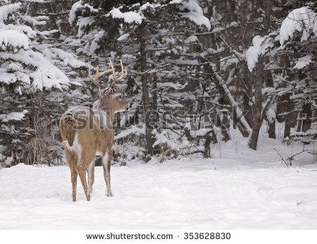 Snow Alert Stock Photos, Royalty.