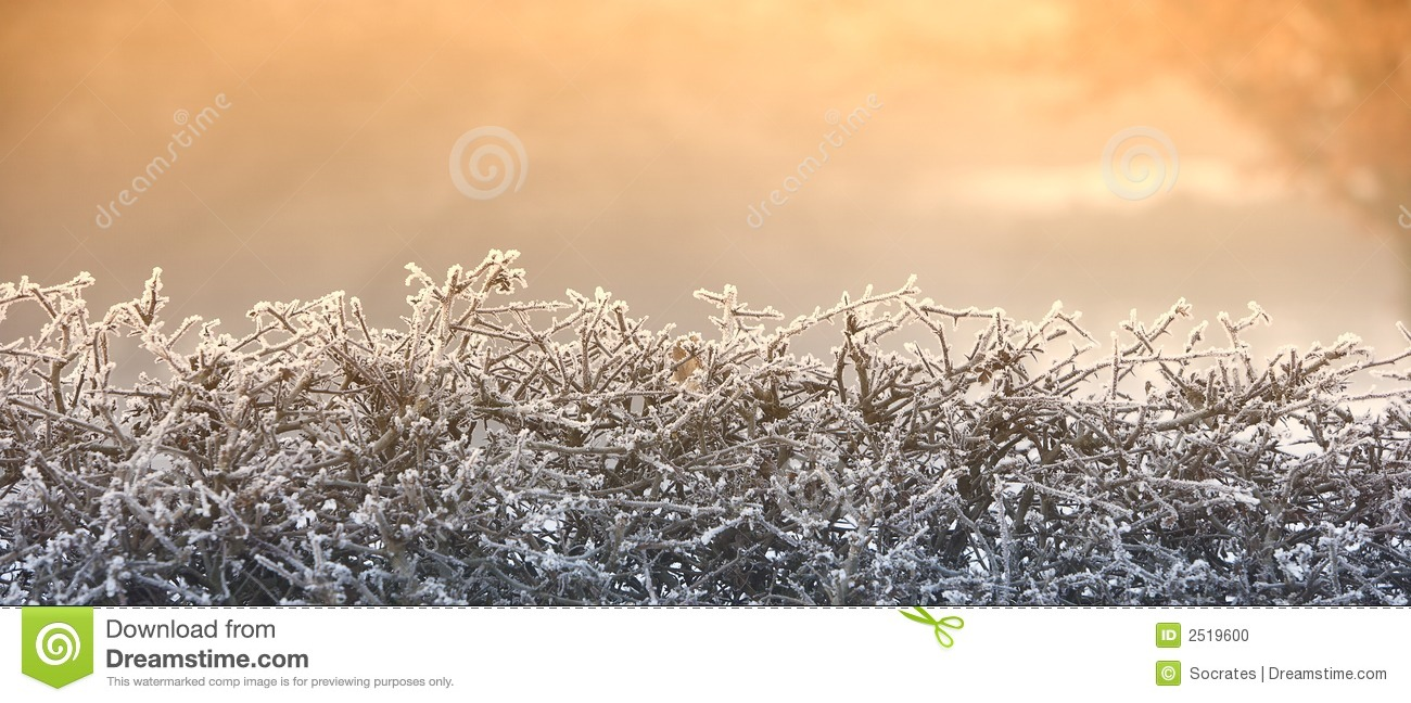 Frosty Hedge Winter Morning Stock Photo.