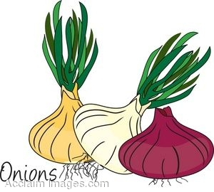 Clip Art of Different Kinds Of Onions.
