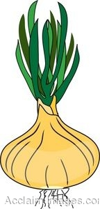 Clip Art of a Just Picked Onion.