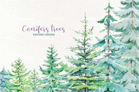 Watercolor Conifers Trees Clipart,Pine Trees Clipart.