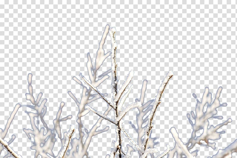 Twig Branch Ice, Frozen branches transparent background PNG.