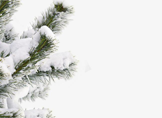 Snow Winter Tree, Winter Clipart, Tree Clipart, Snowy Winter Tree.