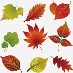 Transparent Fall Leaves Clipart.