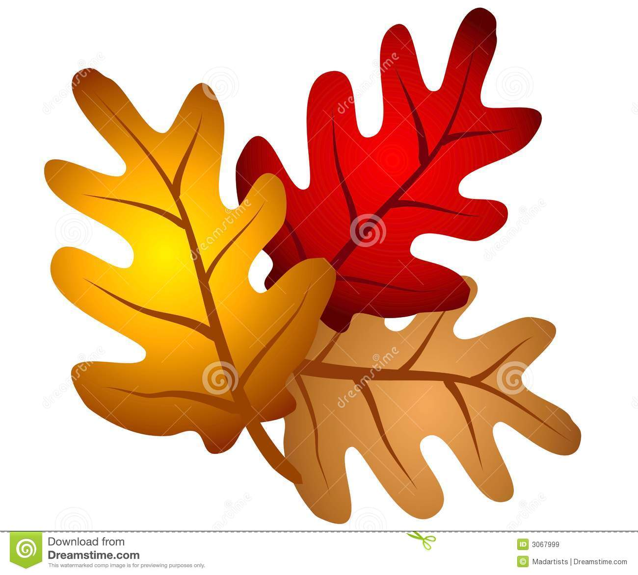 Autumn Oak Tree Leaves Clipart Royalty Free Stock Images.