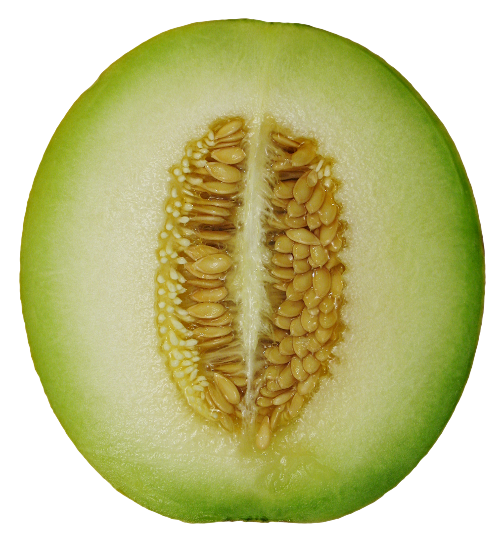 Cucumber clipart winter melon, Cucumber winter melon.