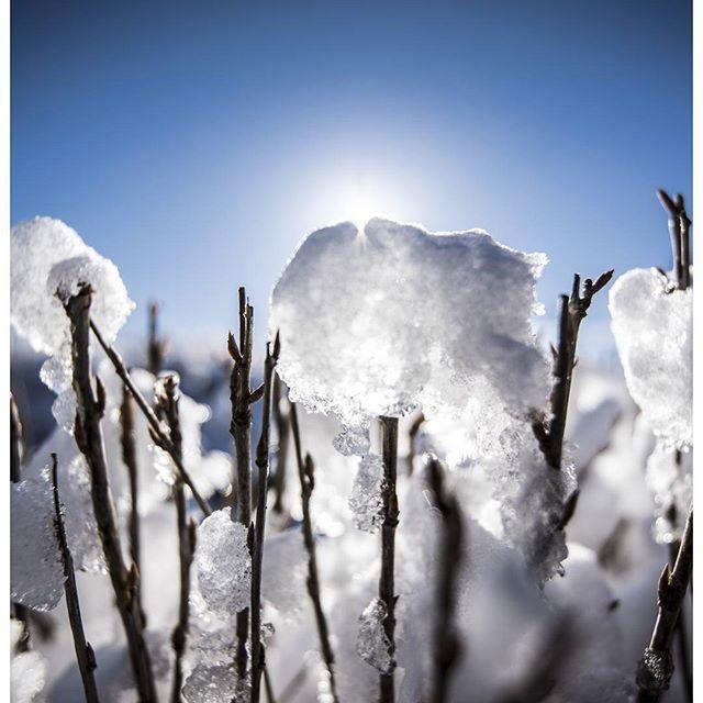 Sunshine And Melting Snow.