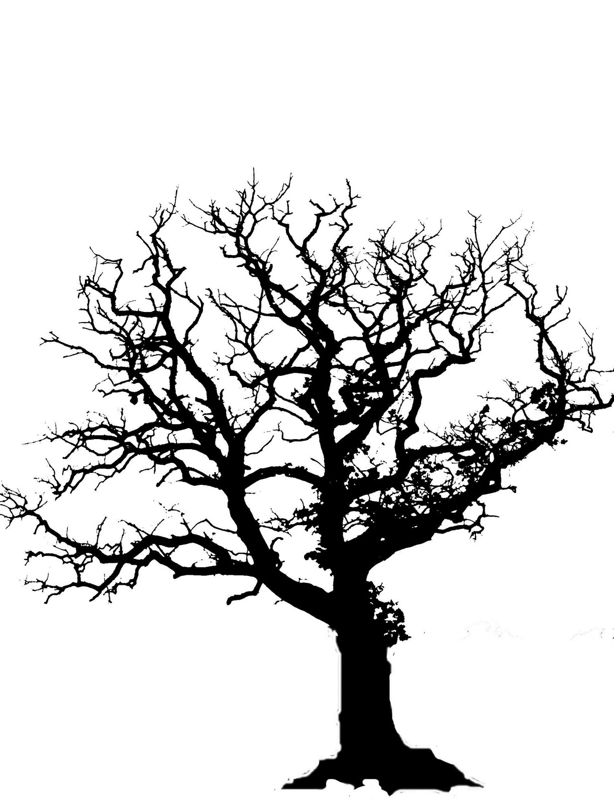 Sunset water oak tree clipart black and white.