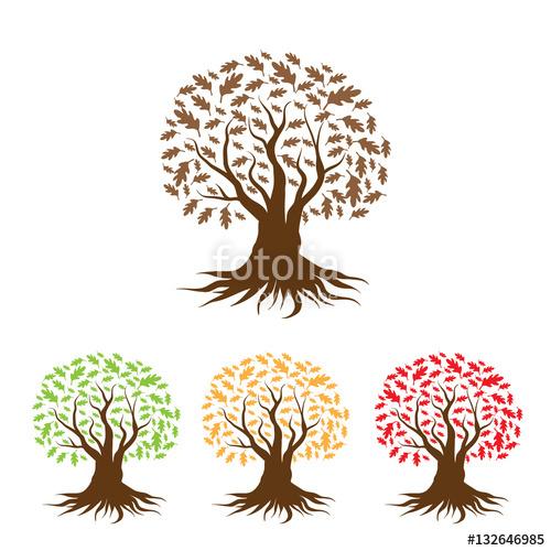oak tree, oak tree logo, winter oak, fall oak, seasons, summer oak.