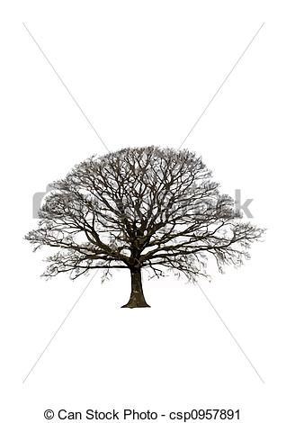 Clipart of Abstract Winter Oak Tree.