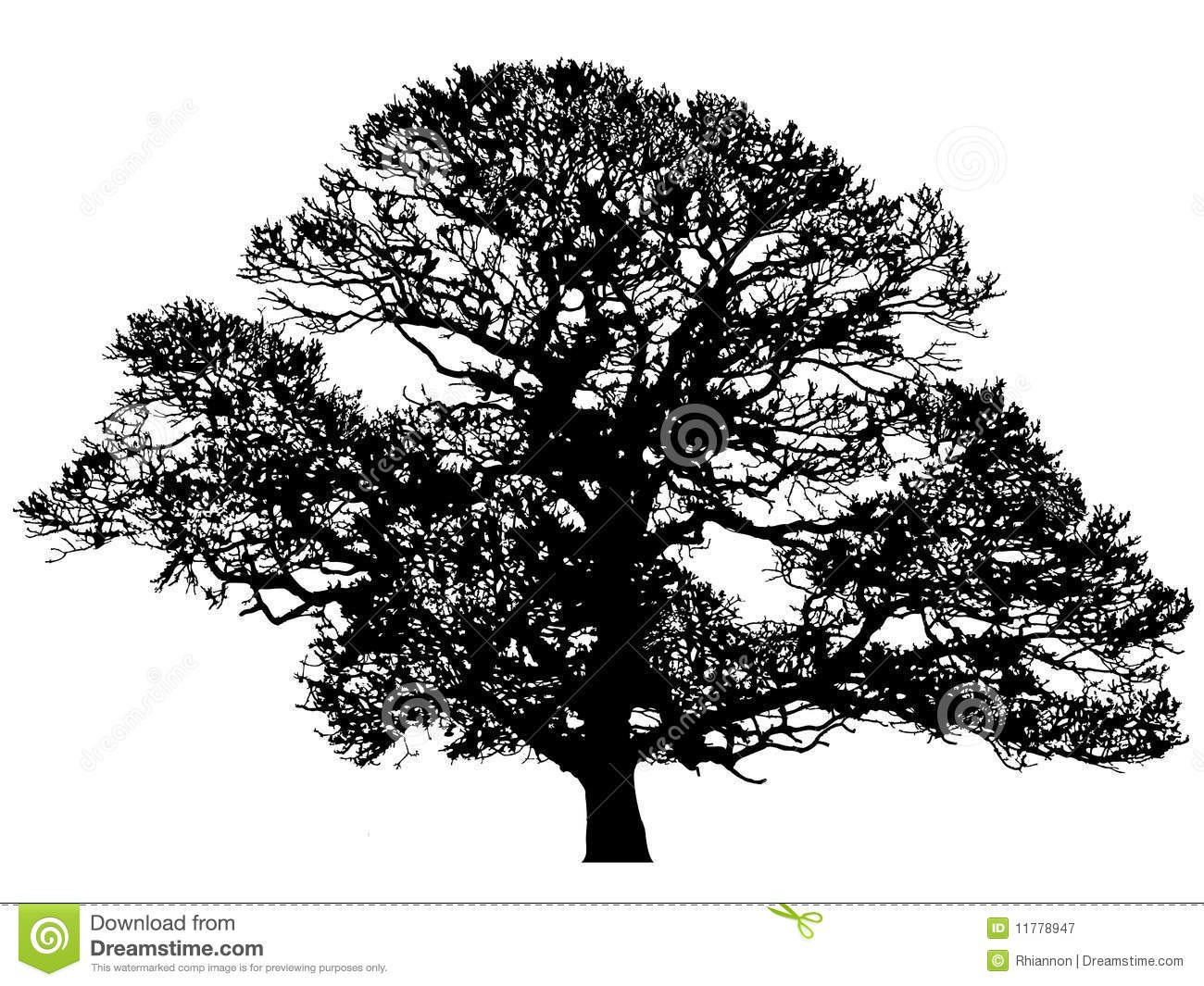 Oak Stock Illustrations.