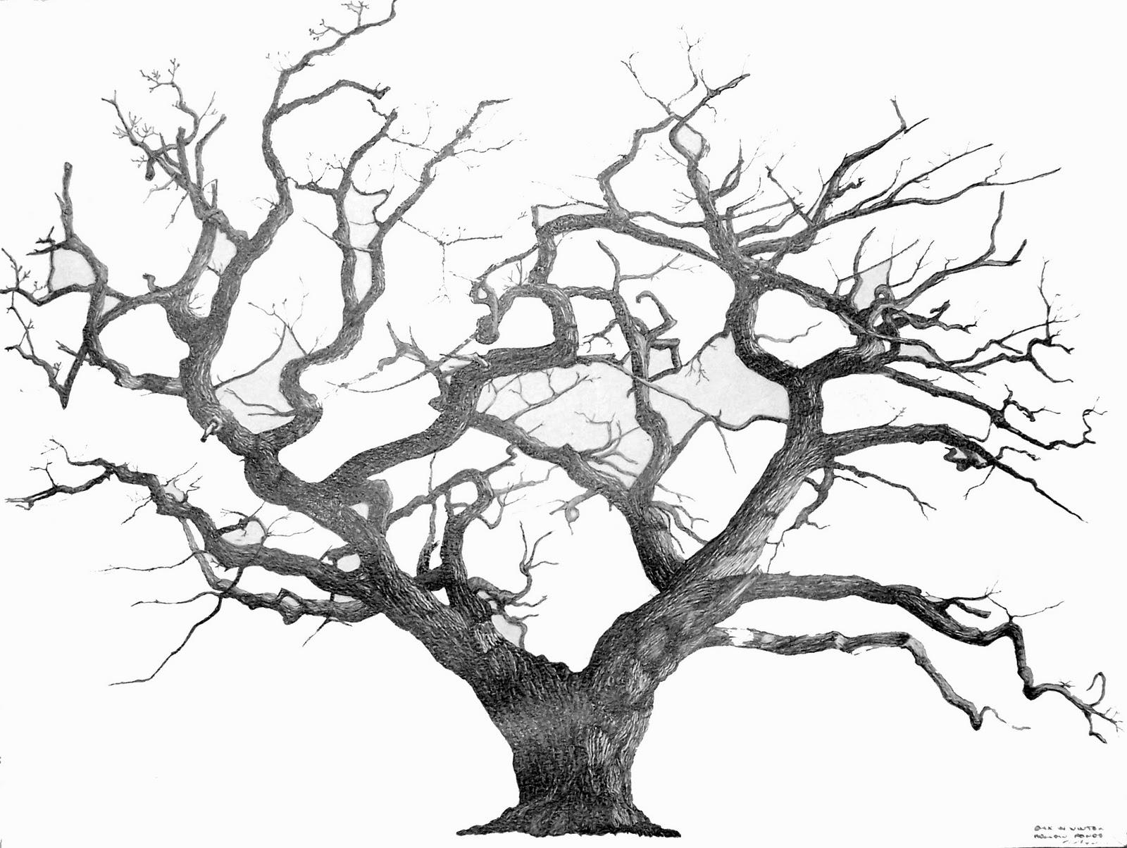 1000+ ideas about Oak Tree Drawings on Pinterest.