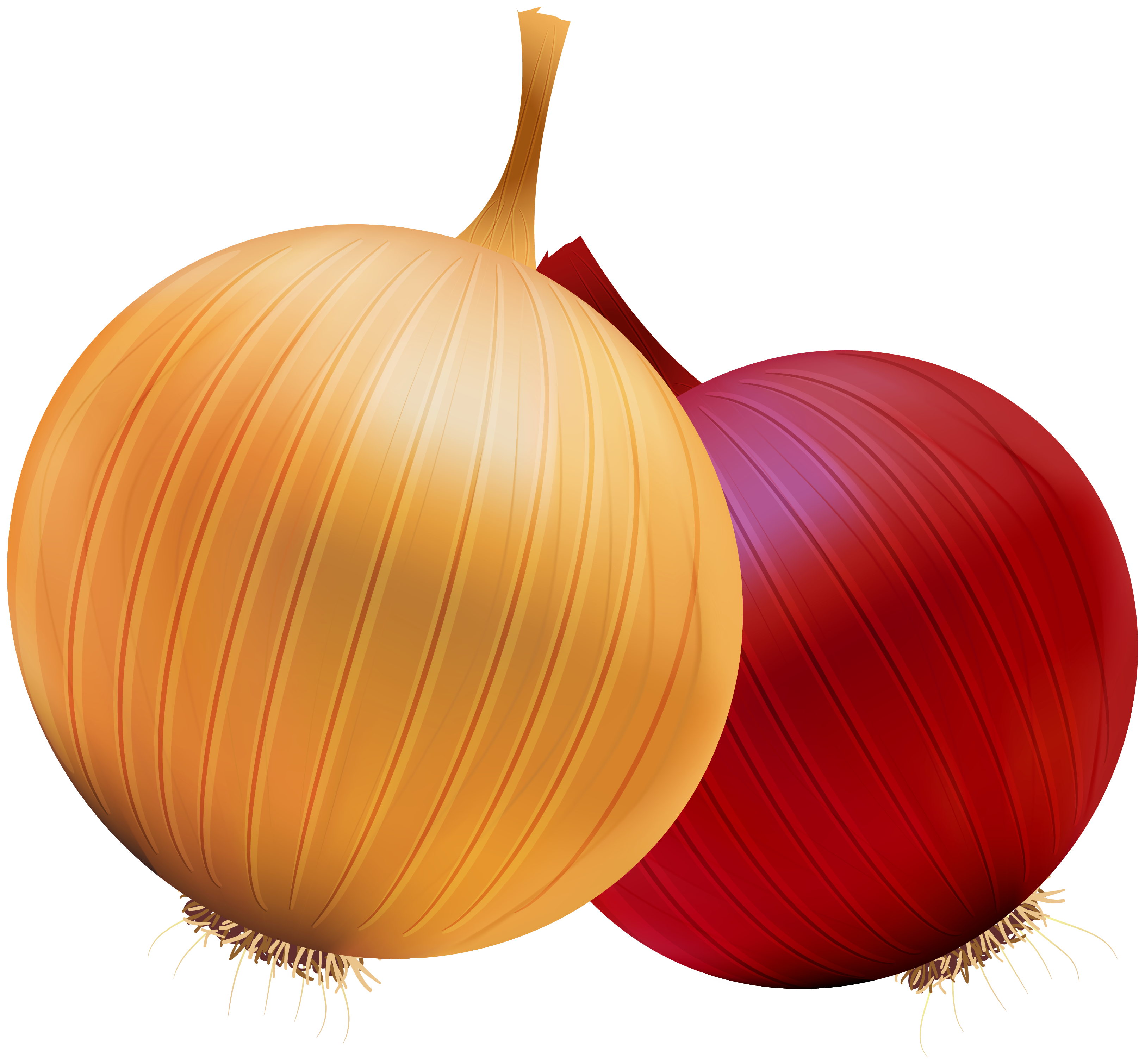 Onion clipart - Clipground