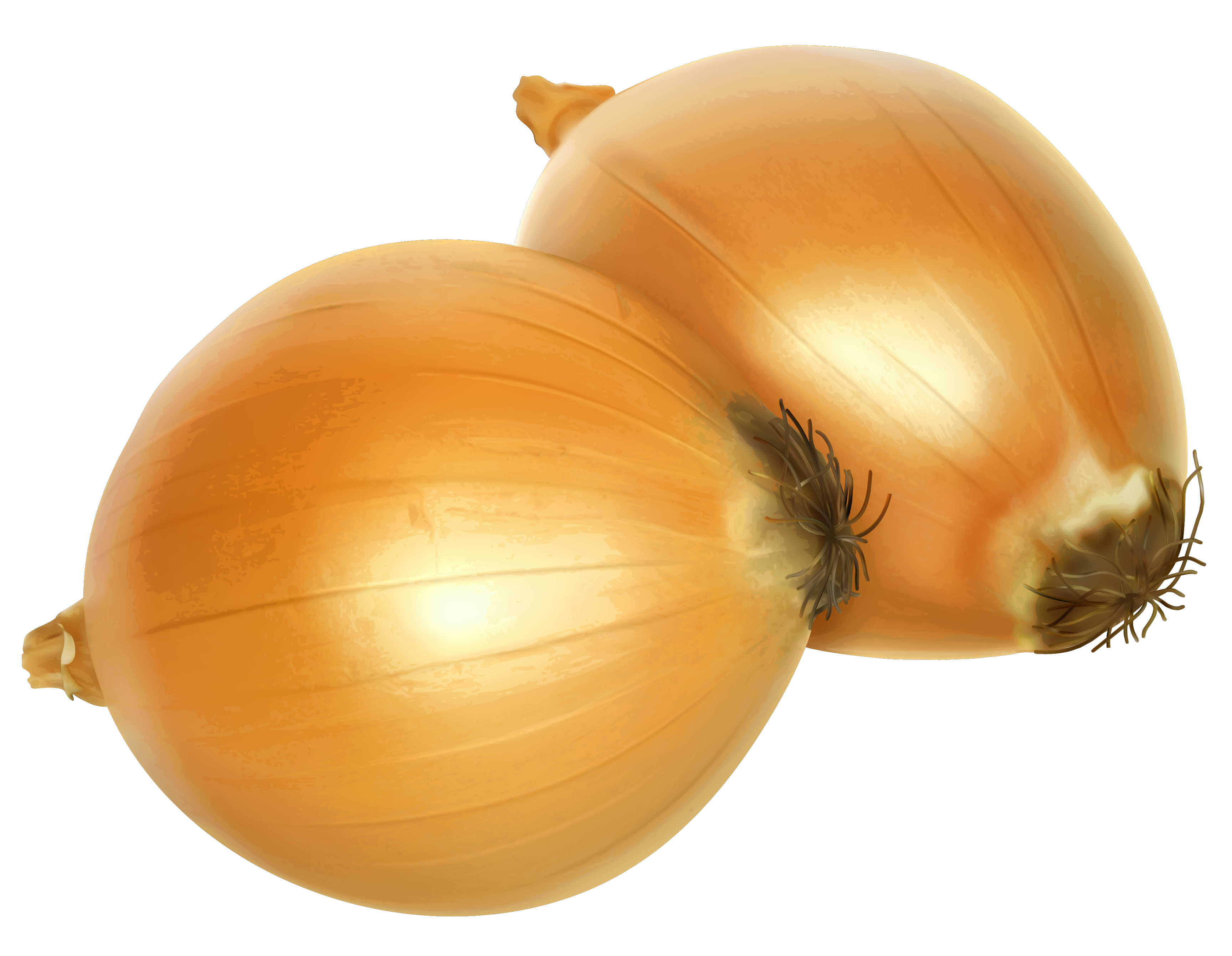 Winter onion clipart - Clipground