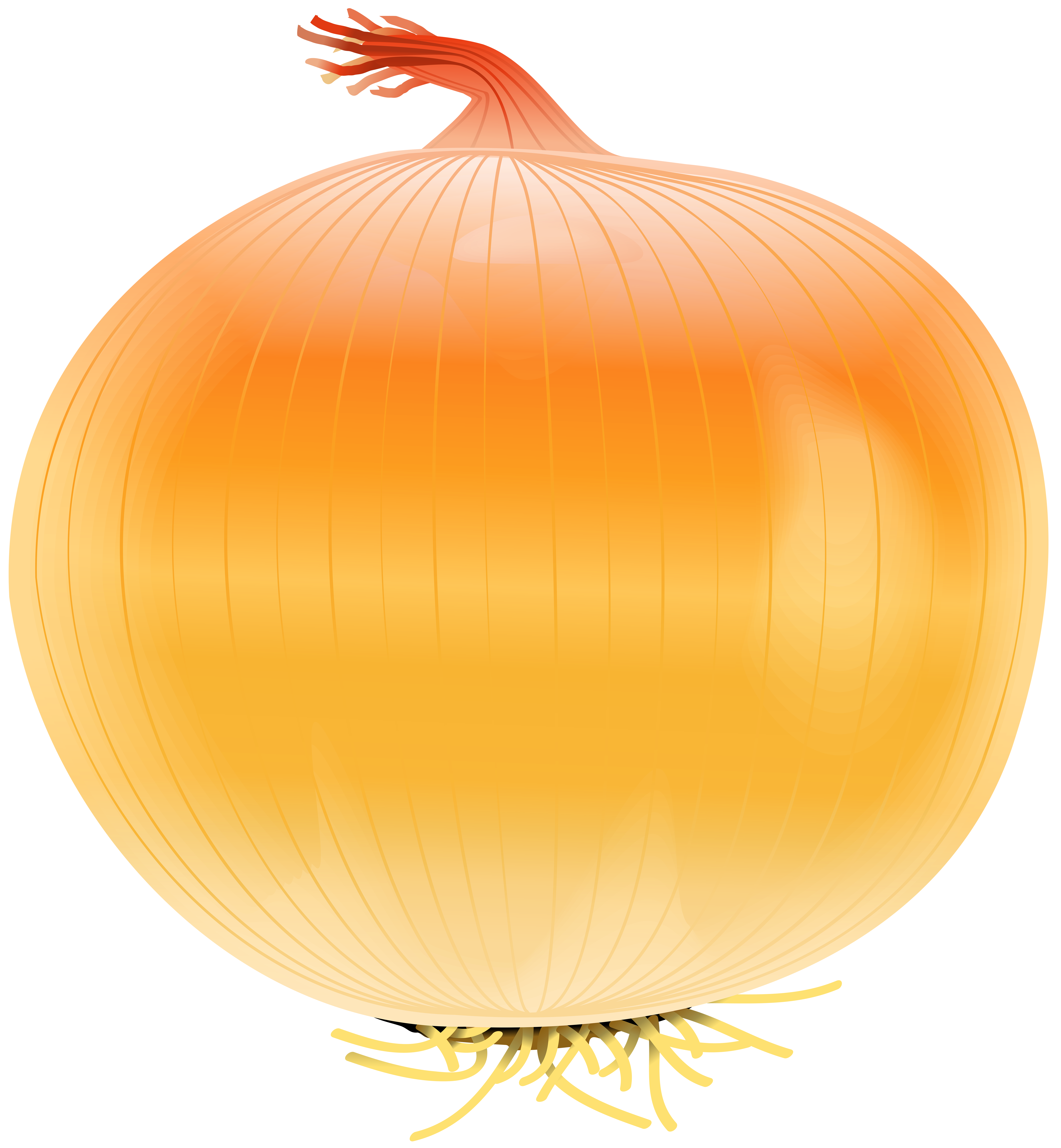 Onion Free PNG Clip Art Image.