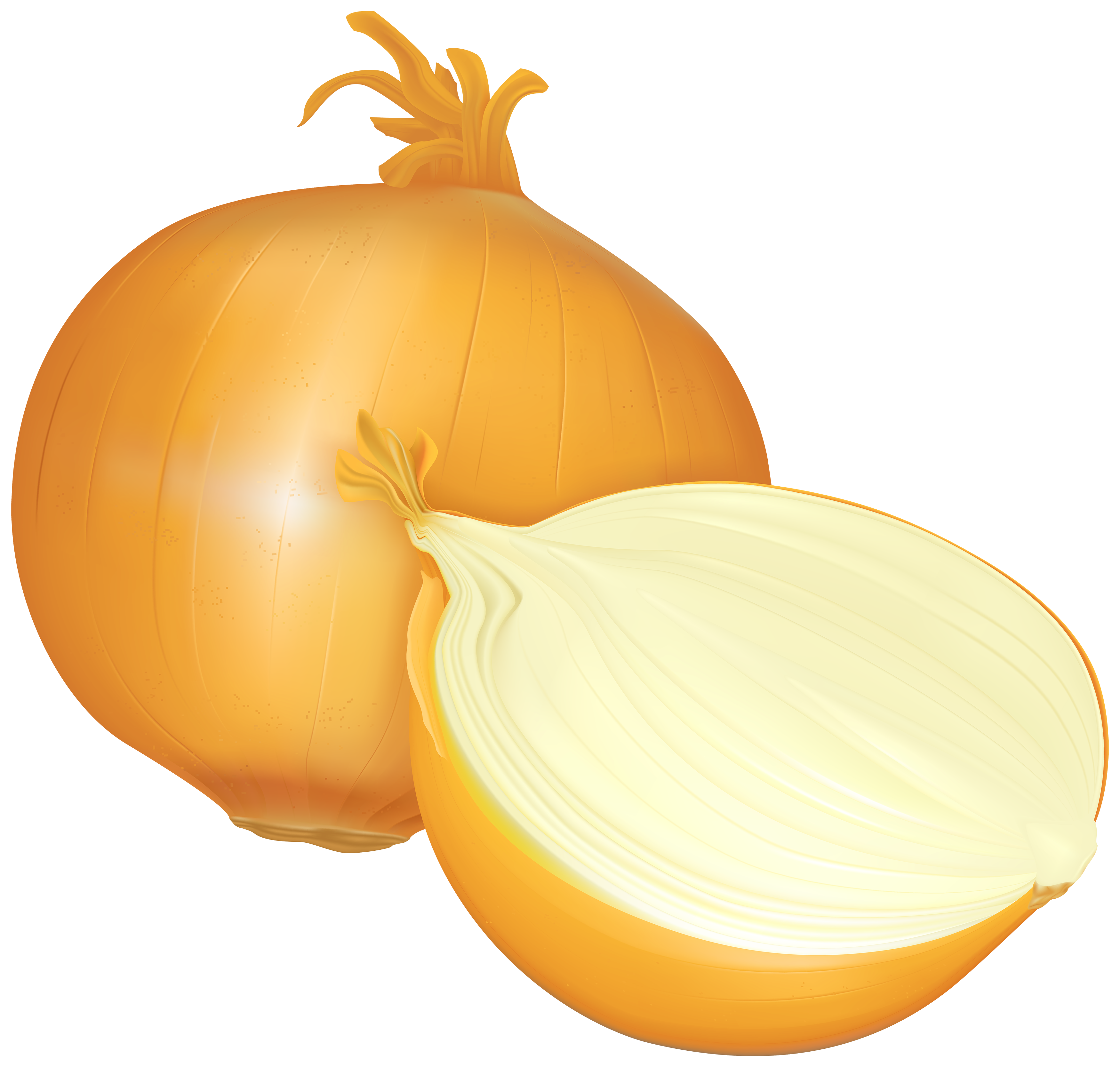 Onion PNG Clipart.