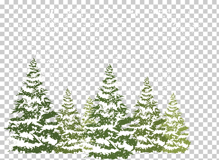 Pine Fir Spruce Snow, Pine winter, pine trees pour with snow.
