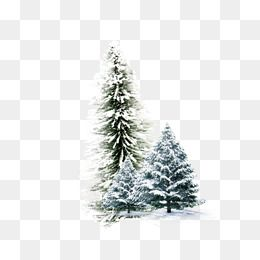 Winter Pine, Winter, Snow, White PNG Transparent Clipart.