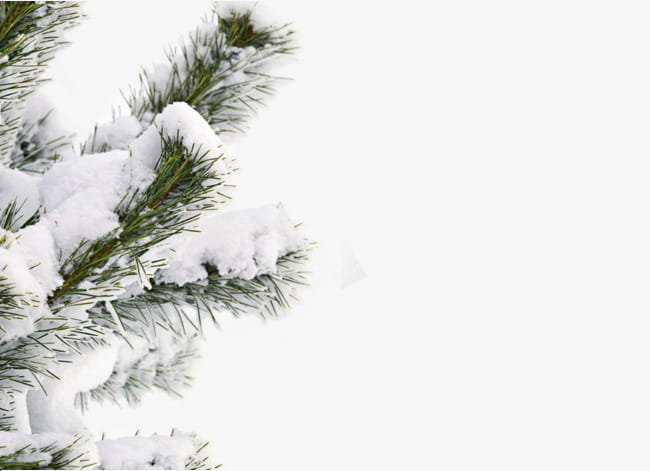 Snow winter tree PNG clipart.