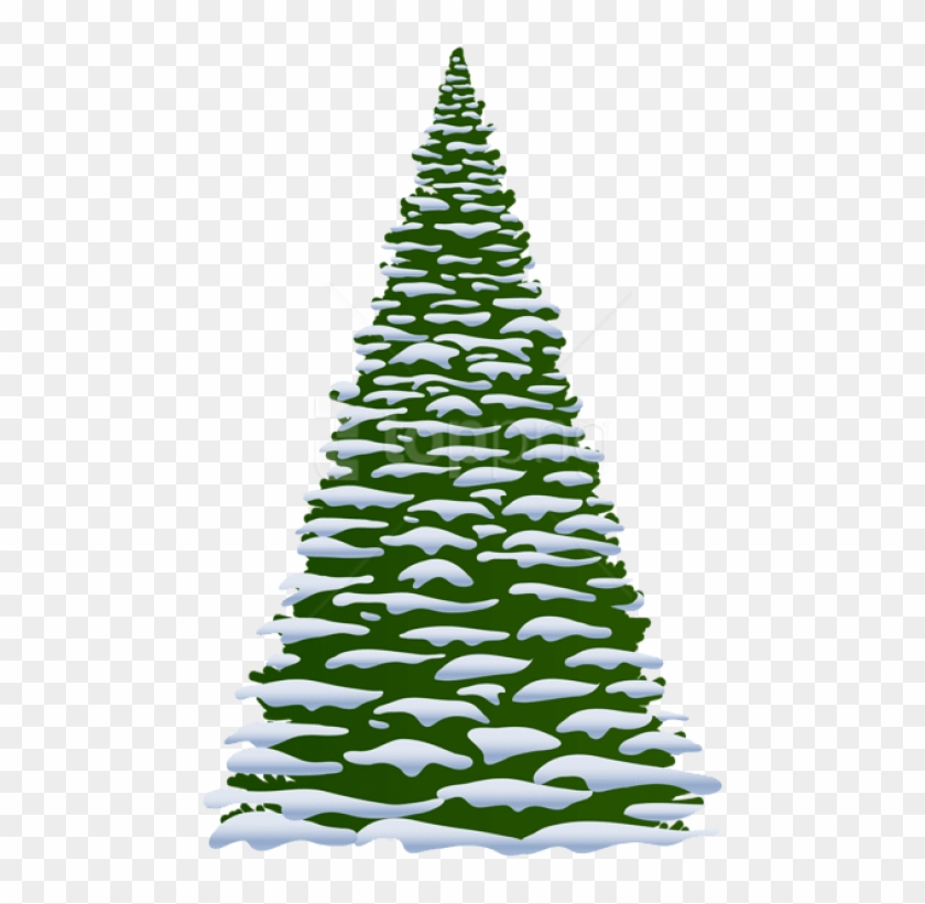 Free Png Winter Pine Tree Transparent Png.