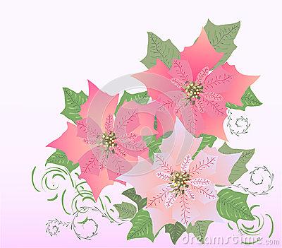 Pink poinsettia clipart.