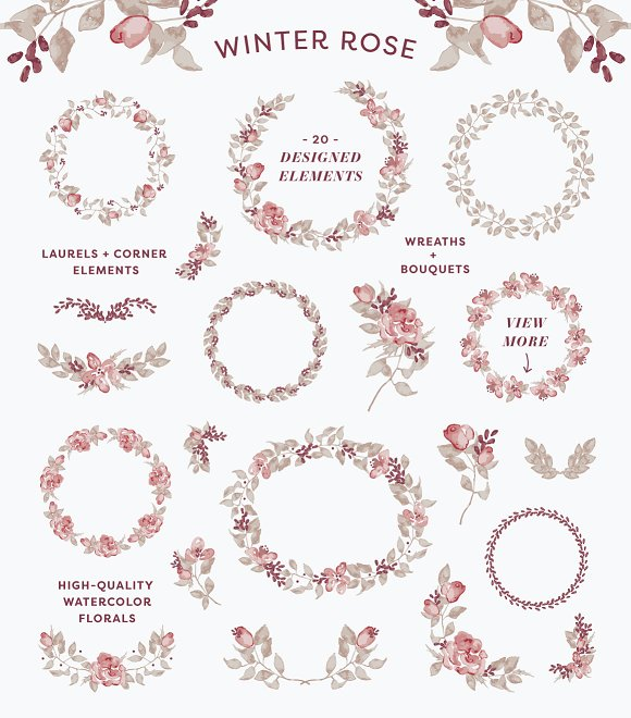 Winter Rose Watercolor Collection ~ Illustrations on Creative Market.