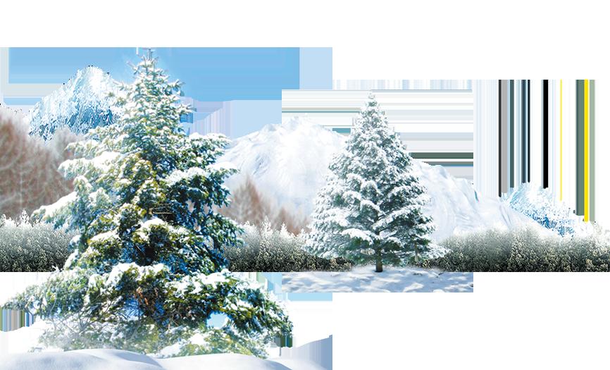 Polar bear Winter Light Wallpaper.