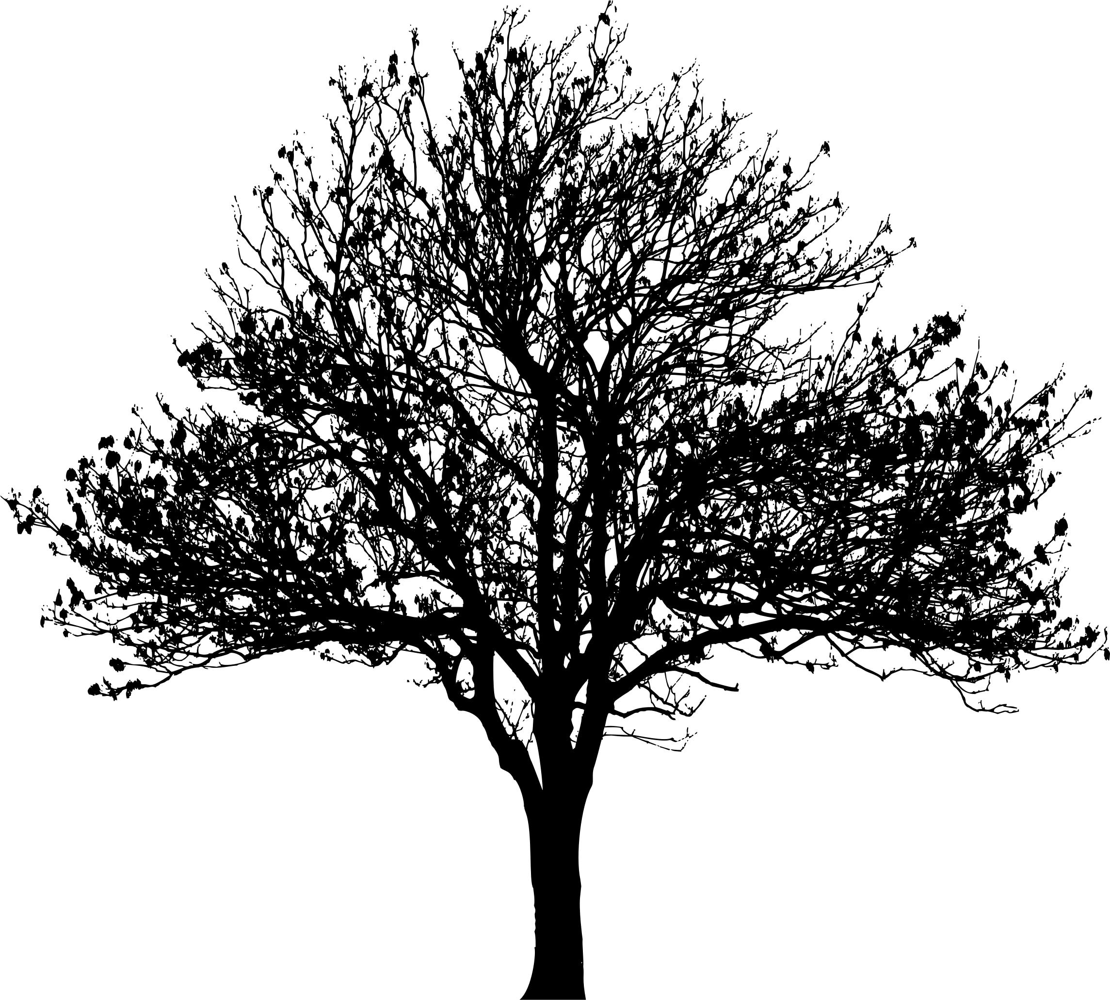 Winter Tree Silhouette Png.