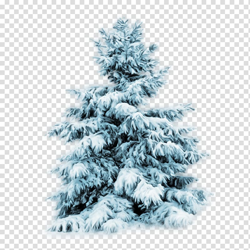 Tree Snow Desktop Pine, winter transparent background PNG.