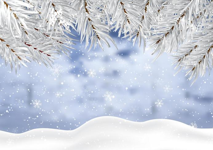 Christmas background with winter snow and tree branches.