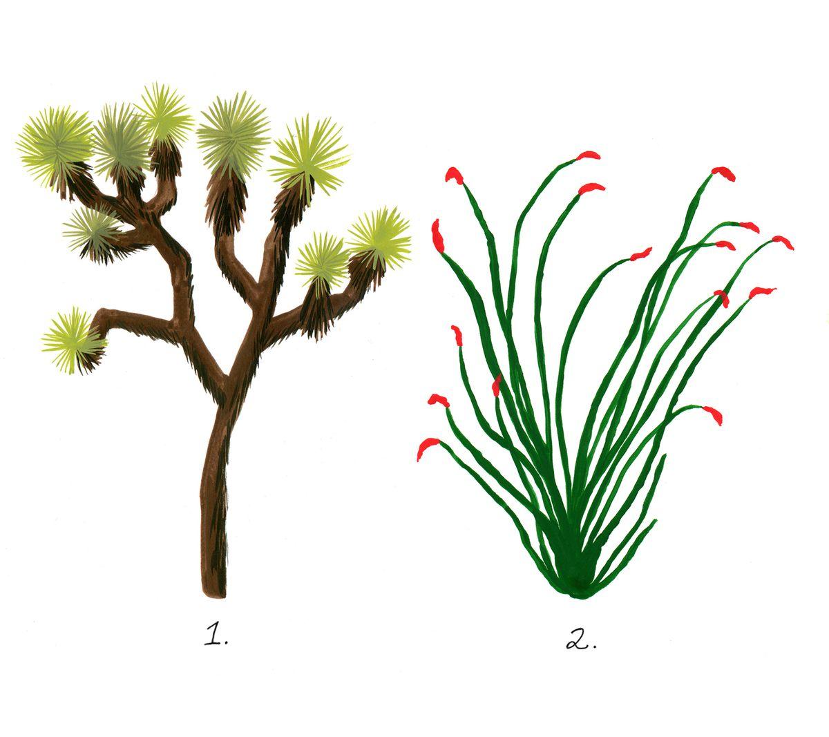 California desert plants: An illustrated guide.