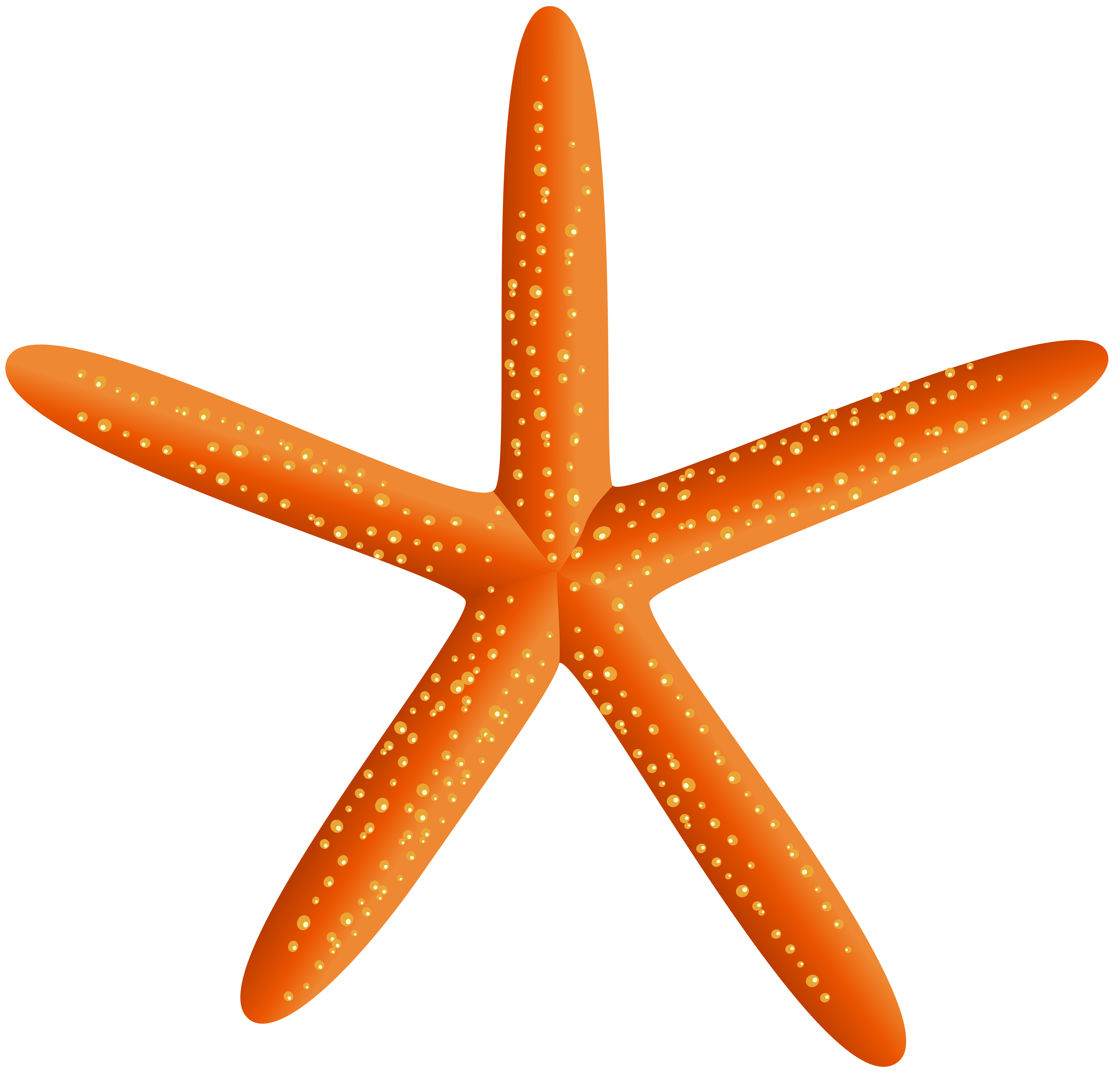 Winter starfish clipart clipart images gallery for free.
