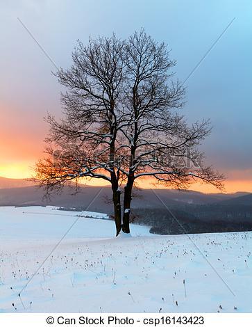 Stock Photo of Alone tree in winter sunrise landscape.