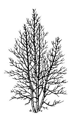 368 Best Tree Drawing images in 2019.