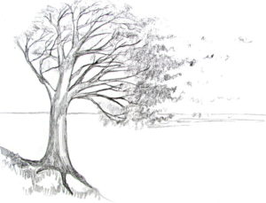 How To Draw A Tree.