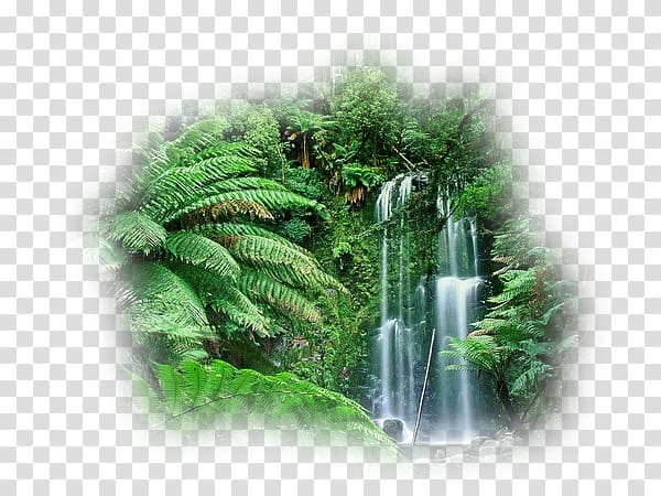 Cloud forest Amazon rainforest Australia Tropical rainforest.