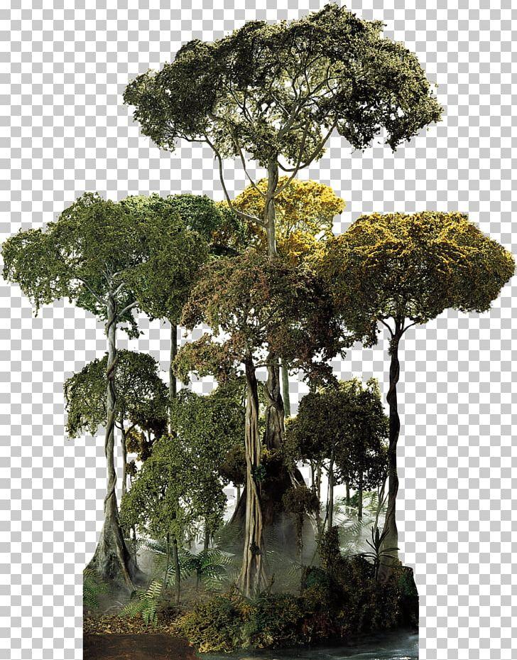 El Yunque National Forest Amazon Rainforest Cloud Forest.