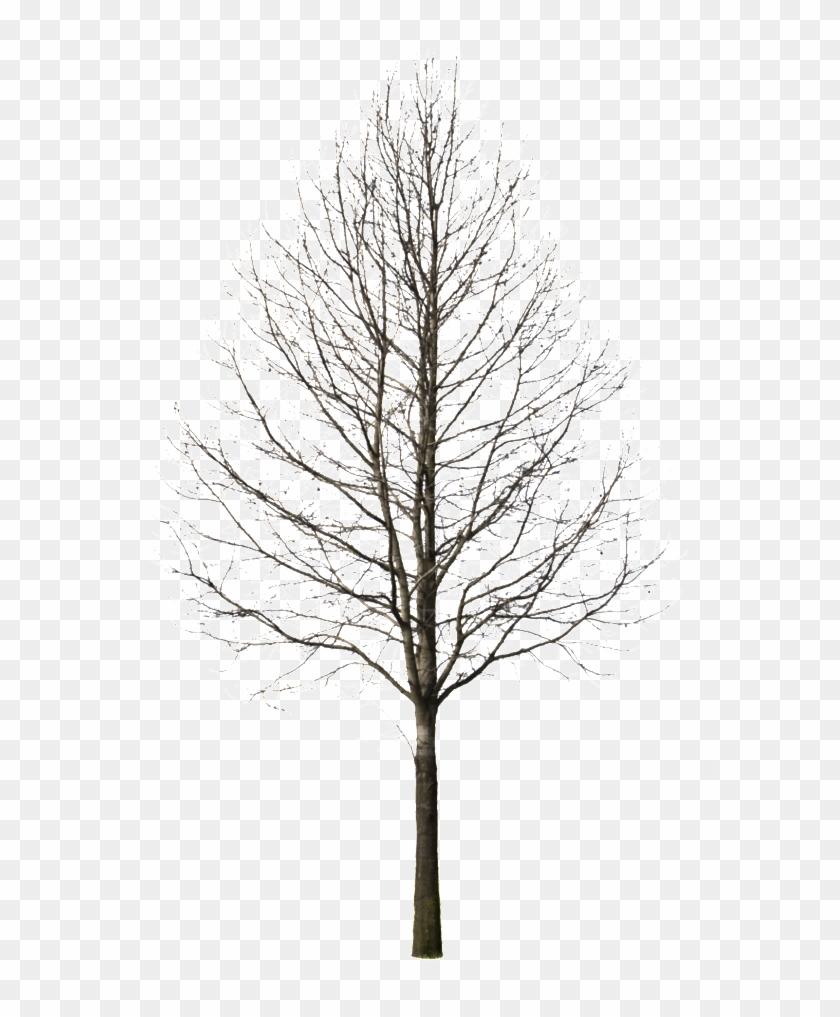 Tree Drawing At Getdrawings.
