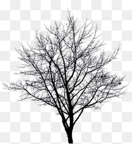 Winter Tree Png Png & Free Winter Tree.png Transparent Images #12207.