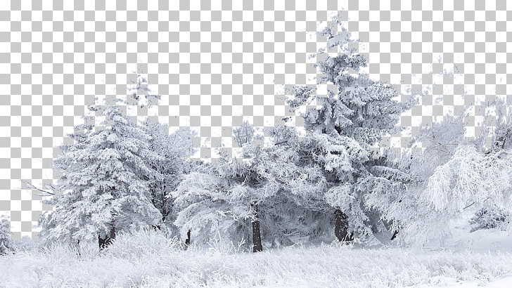 Snow Tree Winter Birch , Snow, gray trees PNG clipart.