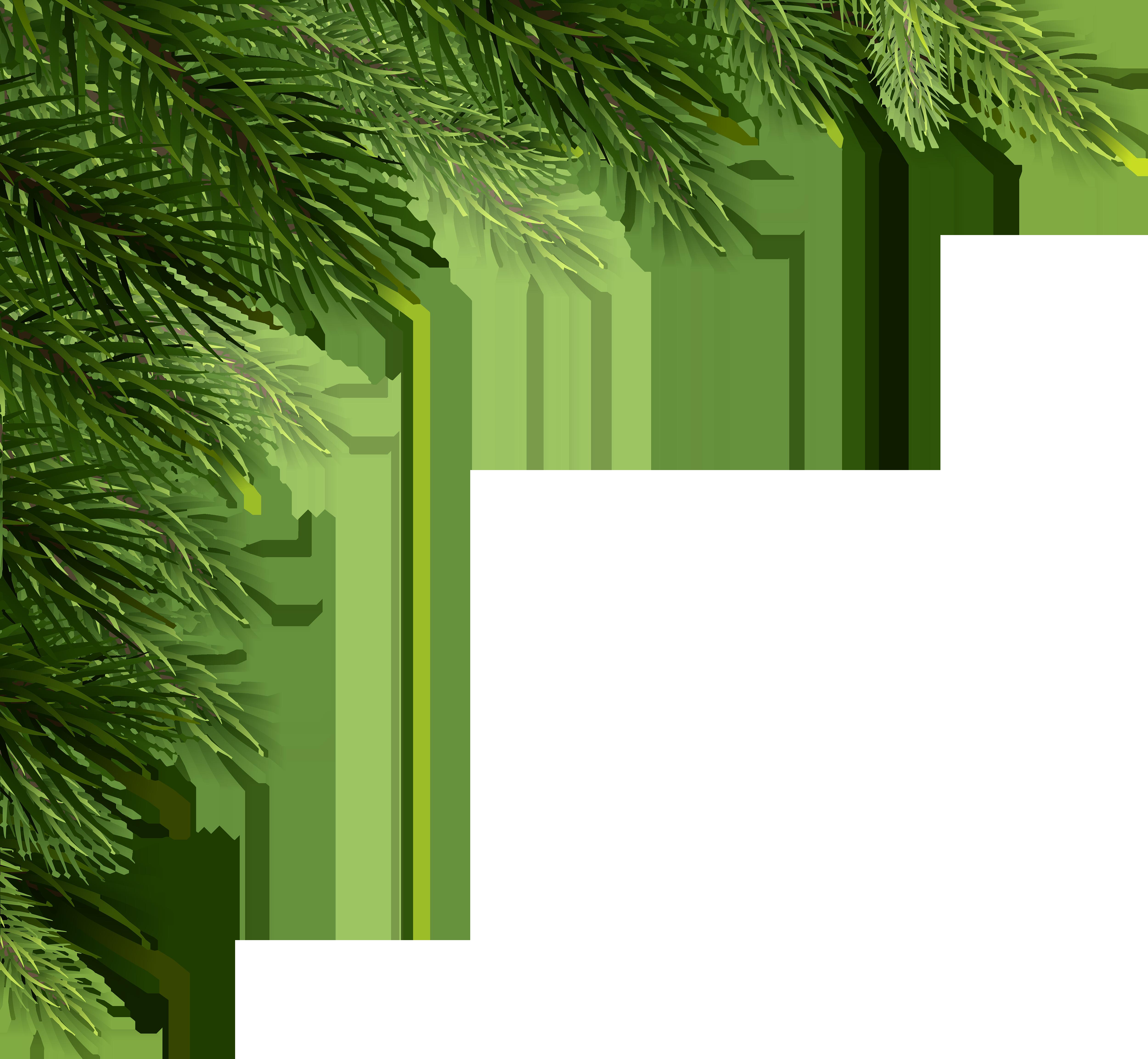 Christmas Pine Png.