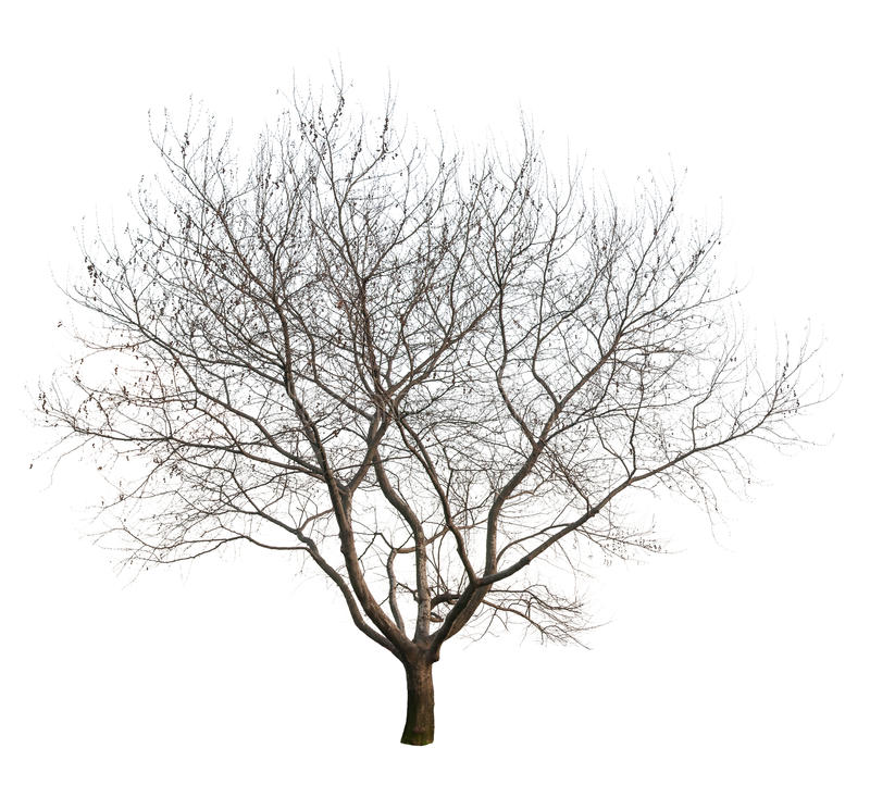 Bare Apple Tree PNG Transparent Bare Apple Tree.PNG Images..