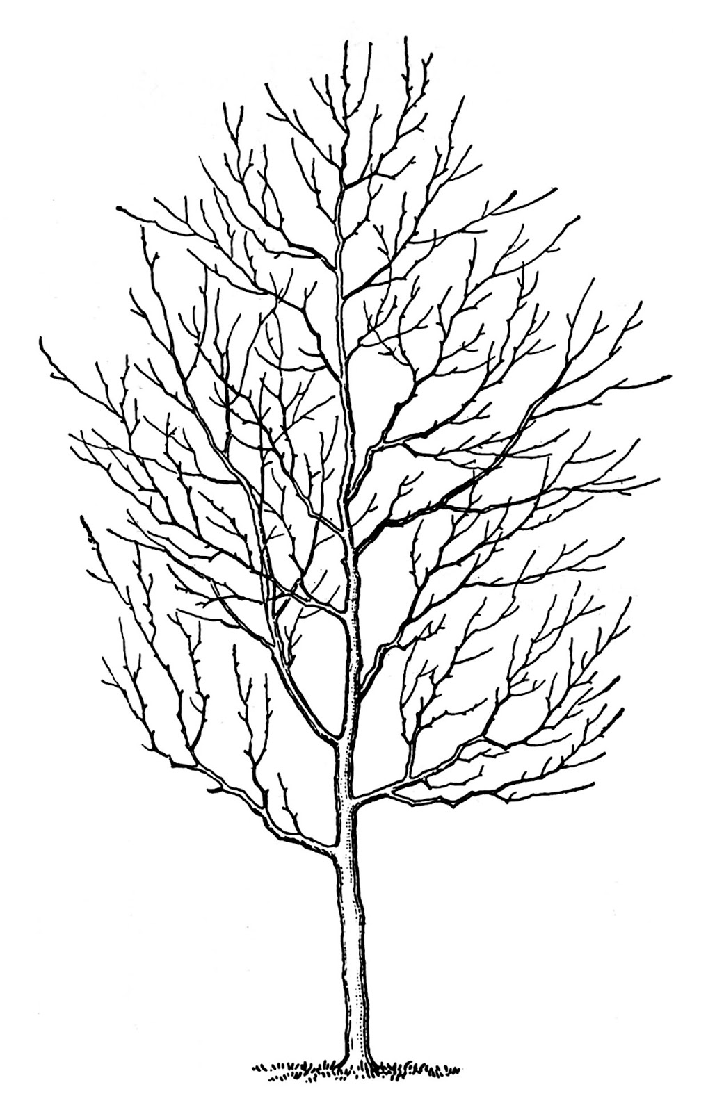 Winter Tree Free Clipart.