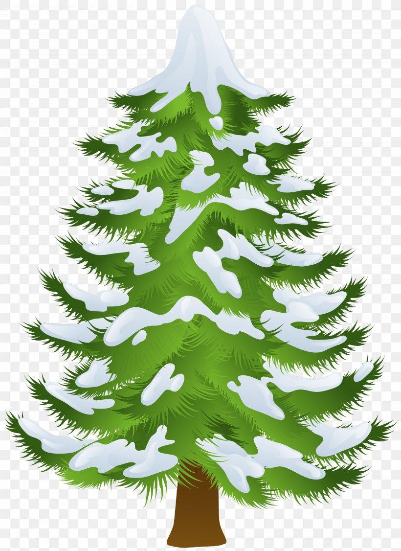 Pine Tree Winter Clip Art, PNG, 5822x8000px, Pine, Branch.