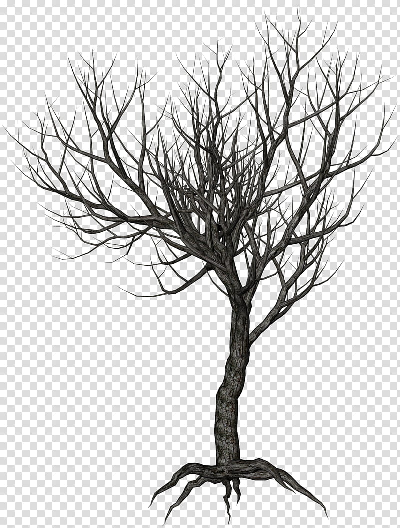 Winter Trees, bare tree illustration transparent background.